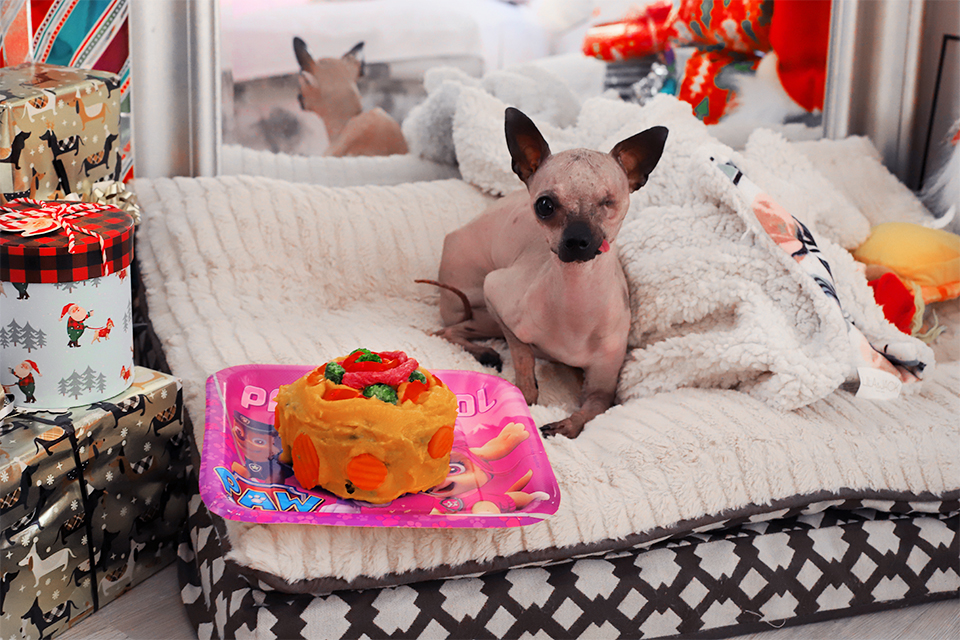 PICASSO'S 1ST BIRTHDAY: DOG BIRTHDAY CAKE RECIPE FOR ALLERGIC DOG